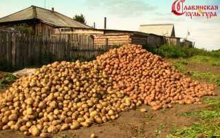 Для чего выращивали в петровские времена картофель