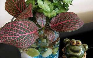 Какие растения комнатные выращивают в гидрогеле?