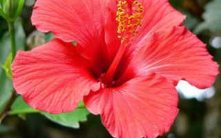 Как правильно выращивать цветы в домашних условиях?