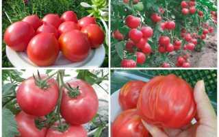Лучшие сорта розовых томатов