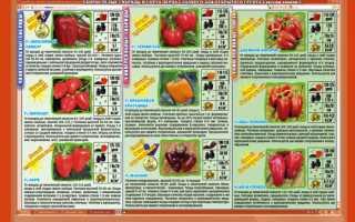 Лучшие сорта томатов семко