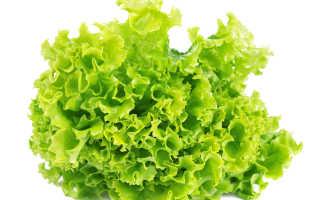 Сорта кочанного салата выращиваемого в открытом грунте