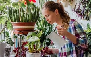 Какие фрукты и овощи можно выращивать на подоконнике?