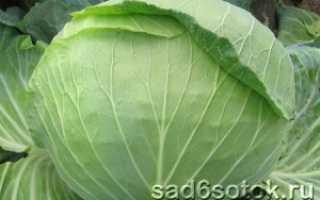 Лучшие сорта среднеспелой капусты