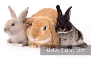 Выгодно ли выращивать кроликов на мясо в домашних условиях