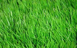Где выращивают рулонный газон в перми и пермской области