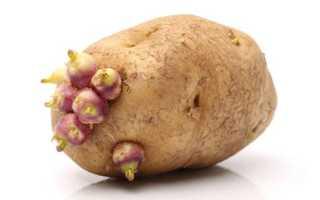 Какие сорта картофеля выращивают в приморском крае?