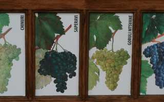 Лучшие сорта винограда грузии