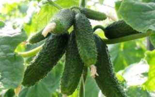 Что можно выращивать в теплице в краснодарском крае?