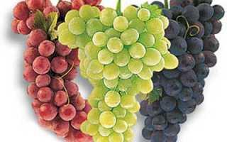 Лучшие сорта дальневосточного винограда