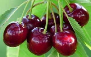 Лучшие сорта плодовых деревьев