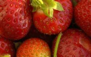 Какие ягоды можно выращивать в домашних условиях?