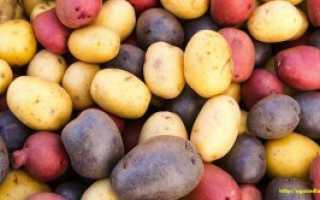 Лучшие отечественные сорта картофеля