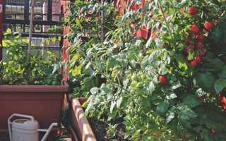 Какие растения можно выращивать на балконе круглый год?