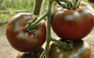 Лучшие сорта коричневых помидор