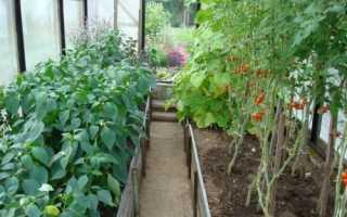 Можно ли в одной теплице выращивать перец и томаты?
