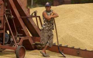 Какие страны выращивают больше пшеницы чем россия?