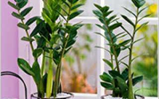 Какие растения можно выращивать на северном окне?