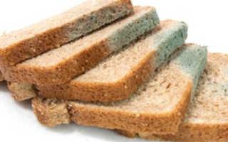 Выращиваем плесень на хлебе в домашних условиях