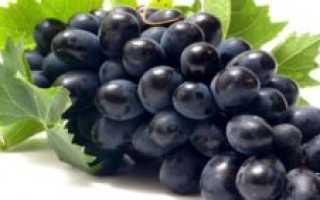 Как выращивать виноград в ленинградской области?