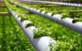 Как выращивать гидропон в домашних условиях инструкция?