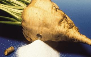 Сахарная свекла в россии где выращивают больше всего