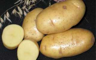 Лучшие сорта картофеля ранние