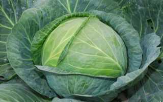 Хорошие сорта поздней капусты