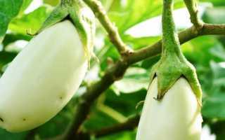 Лучшие сорта белых баклажанов