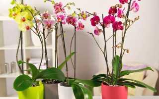 Как выращивать и ухаживать за орхидеей в домашних условиях?