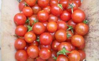 Как в домашних условиях выращивать помидоры черри в?