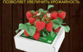 Как выращивать клубнику в теплице пошаговая инструкция?