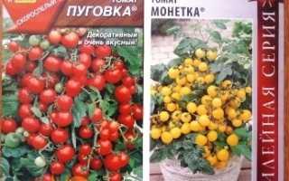 Какие сорта помидор можно выращивать на подоконнике зимой?