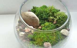 Выращивать мох в домашних условиях