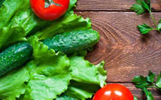 Что лучше выращивать в теплице огурцы или помидоры?