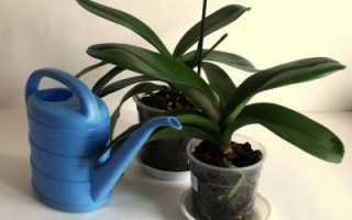 Орхидеи в каких горшках выращивать орхидеи в домашних условиях