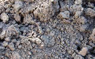 В россии на черноземных почвах в основном выращивают