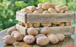 Лучшие для хранения сорта картофеля