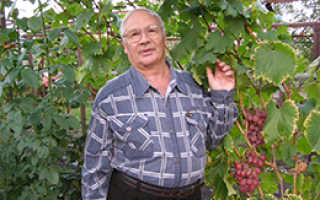 Лучшие сорта винограда крайнова