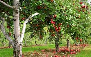 Лучшие сорта финских яблонь