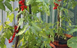 Можно ли выращивать огурцы и помидоры на балконе?