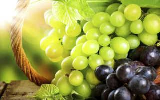 Характеристика лучших сортов винограда