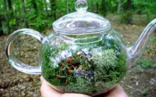 Можно ли выращивать комнатные цветы в прозрачных горшках?