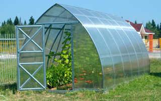 Можно ли выращивать огурцы в теплице из поликарбоната?