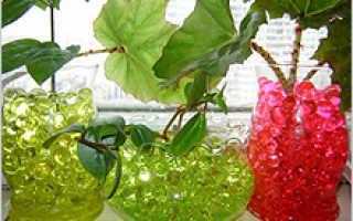 Какие комнатные цветы можно выращивать в гидрогеле?