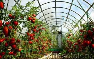 Как выращивать и ухаживать за помидорами в теплице?
