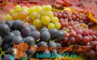 Виноград для подмосковья лучший сорт