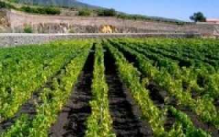 Выращиваемые сельскохозяйственные культуры в испании