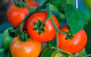 Лучшие сорта помидоров седек