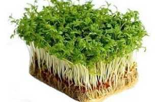 Лучший сорт кресс салата